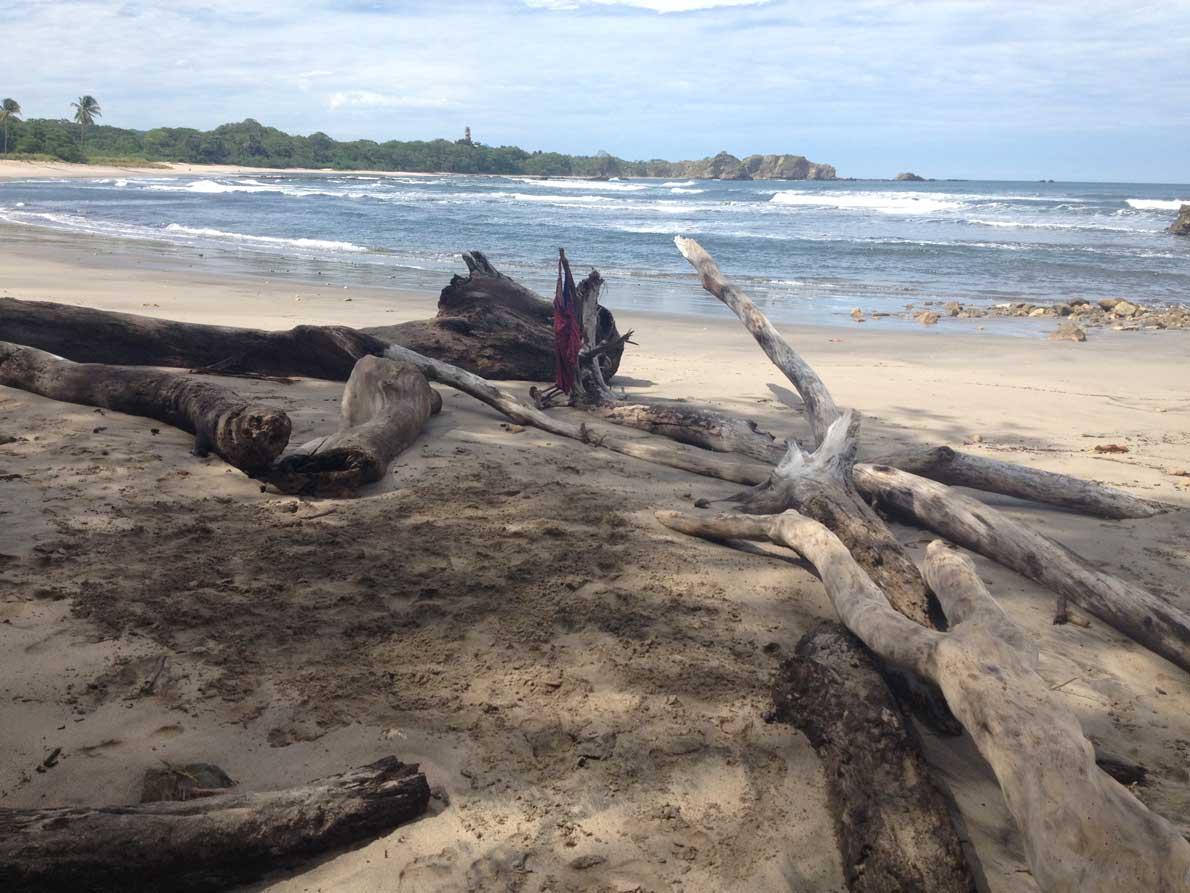 driftwood]